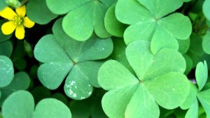 St.-Patrick's- Day-Ride-Discount